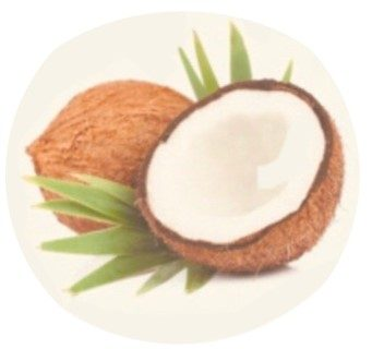 Happy Coconut